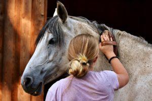 paard borstelen